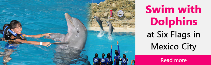 Swim with Dolphins at Six Flags in Mexico City